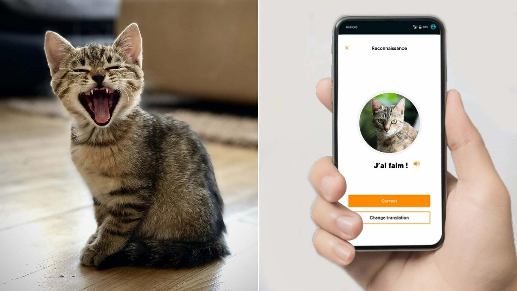 MeowTalk Kedinizle İletişim Kurun!